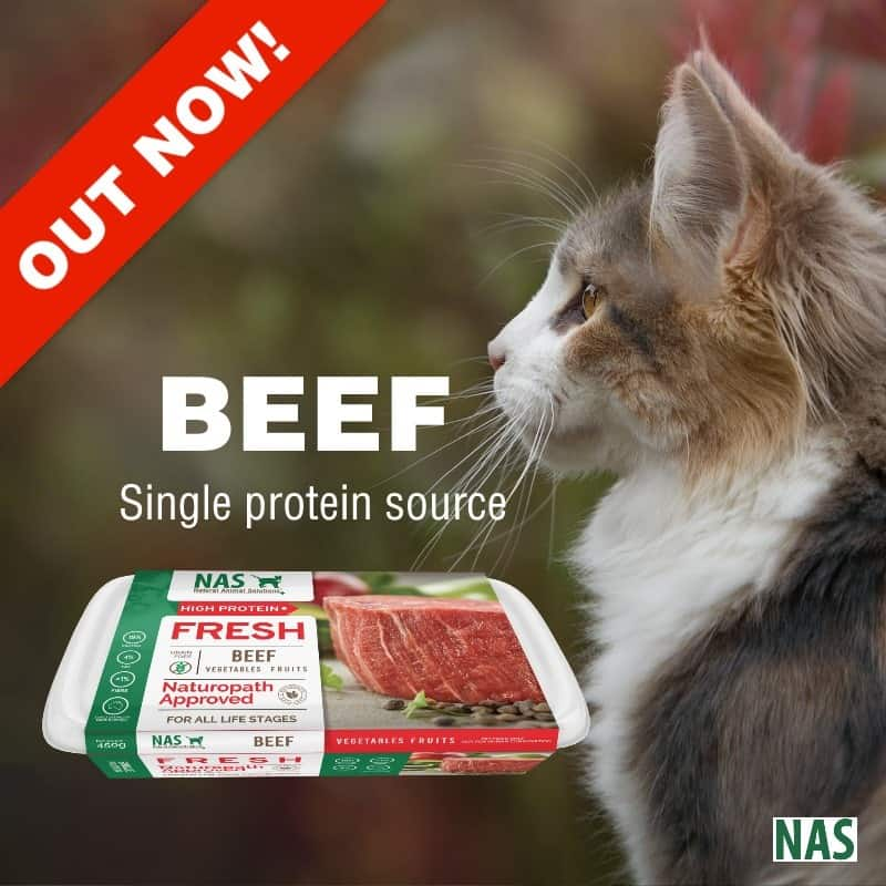 beef-cats