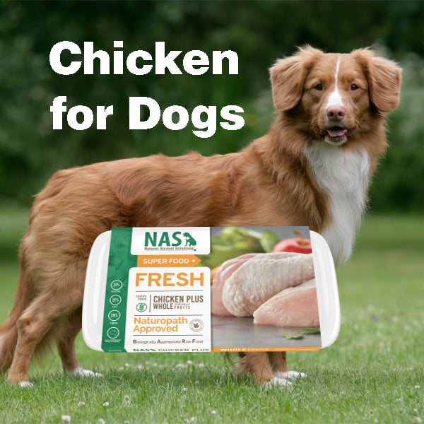 chicken for dogs