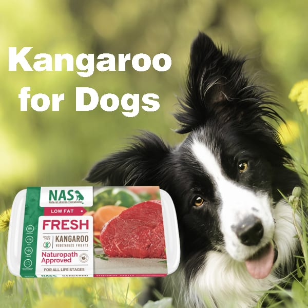 kangaroo for dogs