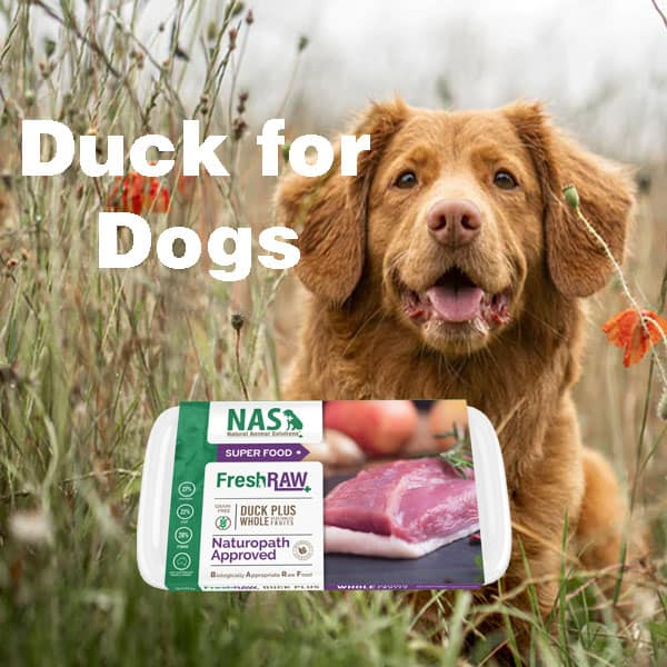 duck for dogs