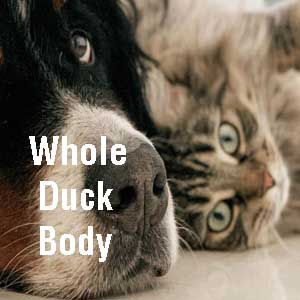 whole duck body